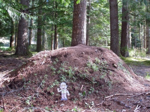 Flat Stanley Ant Hill