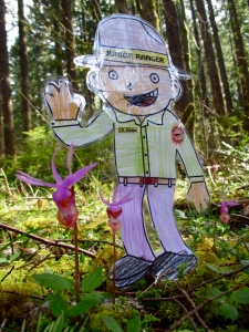 Flat Stanley Calypso Orchid