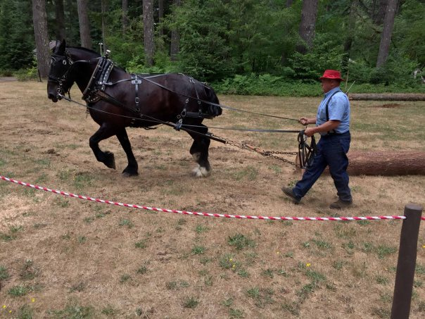 Tim Bielenberg and Draft Horse Pulling