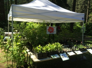 Stamen & Pistil Native Plant Sale